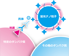 「HSTT(High Sensitive Tissue Testing)」の図
